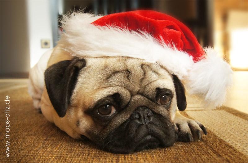 mops-weihnachten